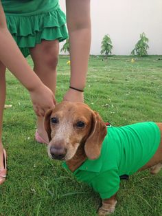 Polo shirt para Puppies