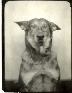 photobooth dog (the professor), vintage photograph, 1944.