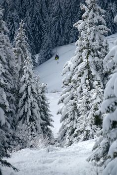 Skiing among the pines