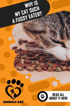 To get your kitty to eat, consider following these tips aside from giving him a prescribed appetite stimulant or natural stimulant: Sick Kitten, Kitten Care, Best Cat Food, Dry Cat Food, Senior Cat Food, Homemade Cat Food, Cat Food Brands, Cat Reading, Animal Nutrition