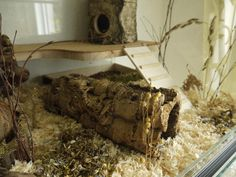 [Terrarium] ♥ Murphy's Buddelparadies auf 160x50x60 ♥ - Gehegevorstellung - www.das-hamsterforum.de
