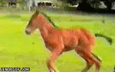 foal wipes out, moms like whoa