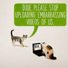 What If Cats Were Using The Internet All Along? by fatheed