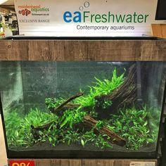 85 best driftwood hardscape images fish tanks aquarium aquariums