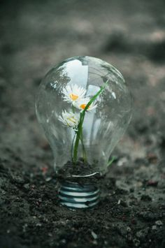 i like this photo because it is like the light bulb represents population then the flower (nature) inside it showing that its being killed by the pollution