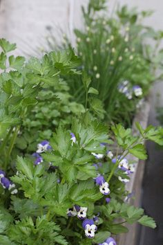 23 and Me: My Favorite Edible Plants to Grow in Shade: Gardenista