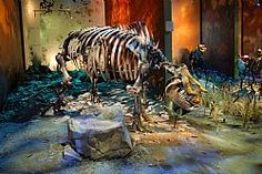 Gray Fossil Site, Johnson City. A museum devoted to the recent discoveries since 2000 of fossils from the Miocene period, including red pandas, turtles, tapirs, a rhino and a bear.