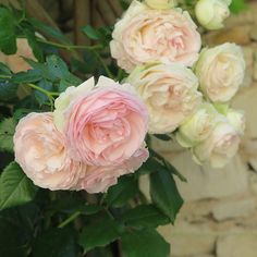 Roses from the blog...