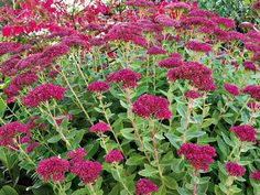 Annual Plants, Parcs, Compost, Perennials, Landscape, Green, Flowers, Provence, House