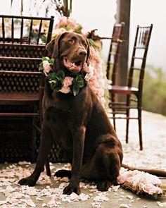 Top dog at wedding. #dog #wedding #details