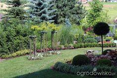 Ogród Sylwii od początku cz.II - strona 271 - Forum ogrodnicze - Ogrodowisko