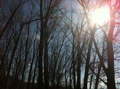 Sol + arbres + dia + bosc