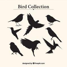 Coleção silhuetas do pássaro Vetor grátis