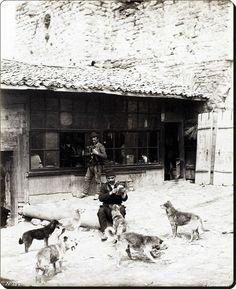 Sokak köpeklerini besleyen bir İstanbul beyefendisi - 1870'ler