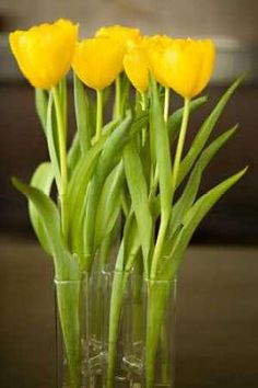 Cuadro Yellow Tulips