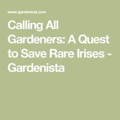 Calling All Gardeners: A Quest to Save Rare Irises - Gardenista