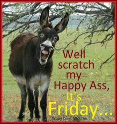 Animal Jokes, Funny Animal Memes, Funny Animal Pictures, Funny Jokes, Hilarious, Happy Friday Quotes, Funny Friday Memes, Friday Funnies, Frases