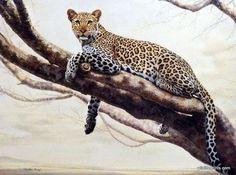 Wildlife artist Charles Frace has captured the majesty of the AFRICAN LEOPARD in this painting. Leopards are primarily nocturnal, resting in trees during the day. In fact, leopards are so comfortable