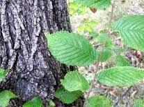 Bitkisel çözümler: Reflü nedir? Bitkisel Tedavi Yöntemleri Nelerdir?
