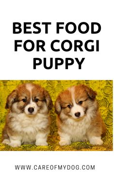 Corgi puppies are very energetic, and they need to feed 3 times a day. The best food for corgi puppy is that which contain daily nutritional needs of corgi. Corgi Dog, Pet Dogs, Dog Cat, Weiner Dogs, Teacup Puppies, Dogs And Puppies, Puppy Food Brands, Best Puppy Food, Corgi Facts