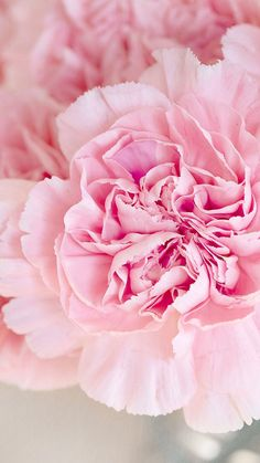 Pink Peonies ★ Download more Pink Floral iPhone Wallpapers at @prettywallpaper