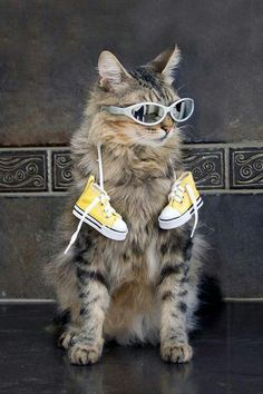 Funny cat in sunglasses & Converse!!