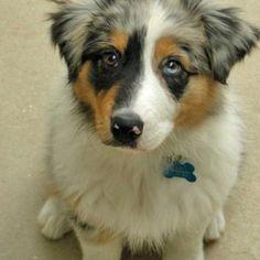 What sweet eyes!