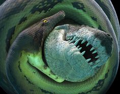 Uma cobra com mais de uma tonelada e que devora crocodilos?  Veja oque trazem para nós!