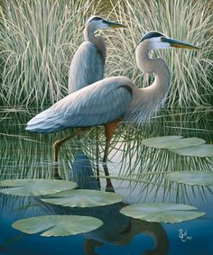 54 ideas bird pictures art blue heron for 2019 Pretty Birds, Love Birds, Beautiful Birds, Animals Beautiful, Animals Amazing, Pretty Animals, Small Birds, Beautiful Men, Beautiful Places