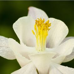 White flower #flower #nature #photography #macro