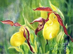 A digitally painted watercolour of yellow lady slippers.