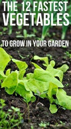 #Gardening : 12 Fastest Vegetables to Grow in your Garden
