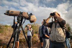 Sagres Birdwatching Festival 2021 | Travel Begins at 40 Mass Migration, Environmental Education, Birdwatching, Marine Life, Portugal, Events, Travel, Viajes, Destinations