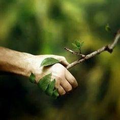 """Amor à natureza (da página """"Presentes da Natureza para a Humanidade"""", do Facebook)."""