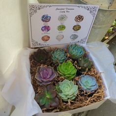 Thank You Gift Box. 9 Assorted Premium by SucculentTreasures
