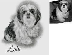 "Lulu the #ShiTzu Sketch. Hand drawn in 8x10"" with graphite pencil by artsit Genevieve Schlueter. See more at www.gensart.net"