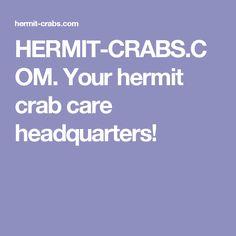 HERMIT-CRABS.COM. Your hermit crab care headquarters!