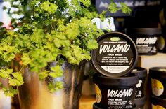 Take care of your feet this summer with our Volcano Foot Mask! Cooling and invigorating this mask contains powerful deodorising ingredients and brightening papaya! #LushOxfordStreet #LushCosmetics #Volcano #FootMask