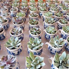 Marturii nunta plante suculente | YaU Concept BLOG Plantar, Wedding Decorations, Wedding Ideas, Fall, Succulents, Green, Autumn, Wedding Ceremony Ideas, Wedding Decor
