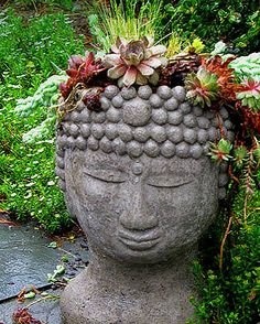 Buddha head with succulents