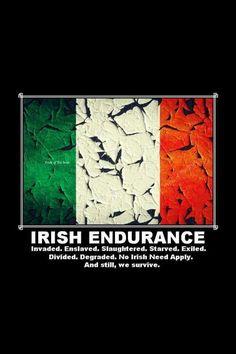 Erin go Bragh! Irish Proverbs, Erin Go Bragh, Irish People, Irish Eyes Are Smiling, Irish Culture, Irish Pride, Irish Quotes, Irish American, Irish Girls