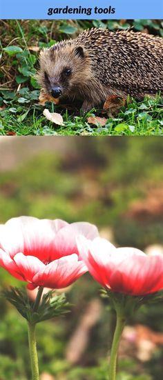21 best Miniature Gardens images on Pinterest in 2018   Miniature ...