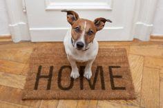 Come fare le #pulizie con #animali #domestici in #casa