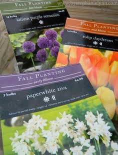 Pot of perpetual spring colors with fall bulbs, plant now, stick in the basement till spring.