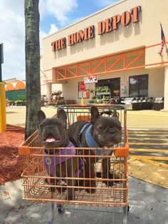 Dog friendly stores  from: http://barkpost.com/dog-friendly-stores-that-allow-your-pooches/?utm_source=facebook&utm_medium=post