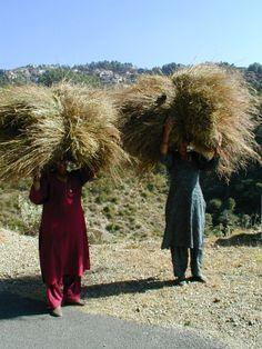 Shimla India Women working