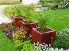 Green Foliage Colors Contrast with Dark Red Pots    Dark red contemporary containers mix with the contemporary hues of green dasylirion longissimum.