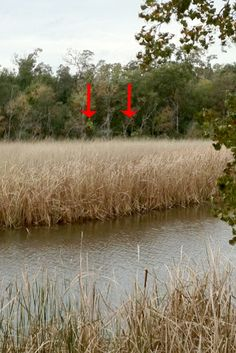 Bigfoot sighting along Neches River?