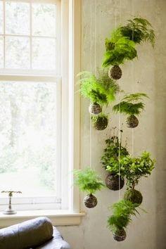 """PLANTAS, FLORES Y VELAS ....Para decorar, para disfrutar !!: """"KOKEDAMAS"""". CURIOSAS BOLAS DE MUSGO."""