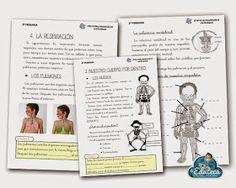 La Eduteca: RECURSOS PRIMARIA | Unidad didáctica del cuerpo humano para 2º de Primaria